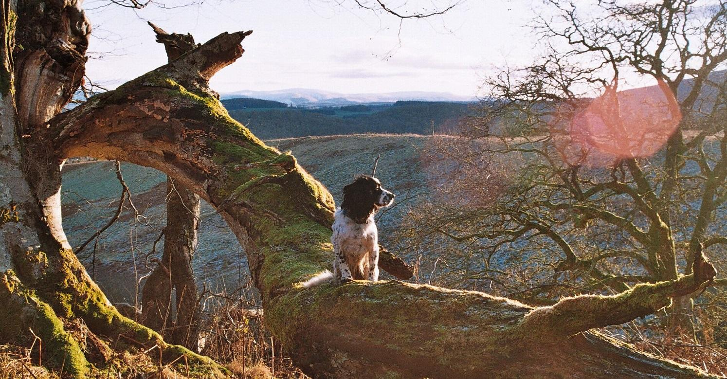 Scenic view with cocker spaniel on fallen tree branch
